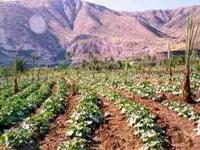 agriculturer_img3